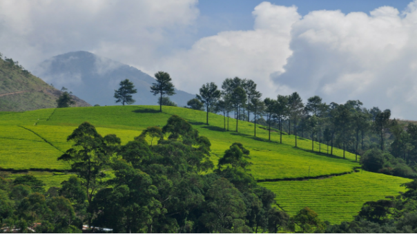 Wayanad Tour Packages