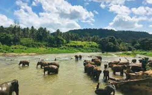 Bhadra Wildlife Sanctuary, Chikmagalur City Darshan Cab.cabsrental.in