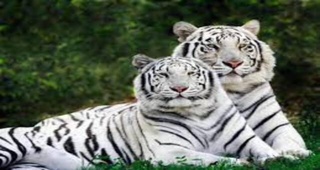 Mysore Zoo,Mysore City darshan Cab,cabsrental.in