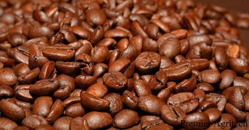 coffee Beans,Chikmagalur City Darshan Cab.cabsrental.in